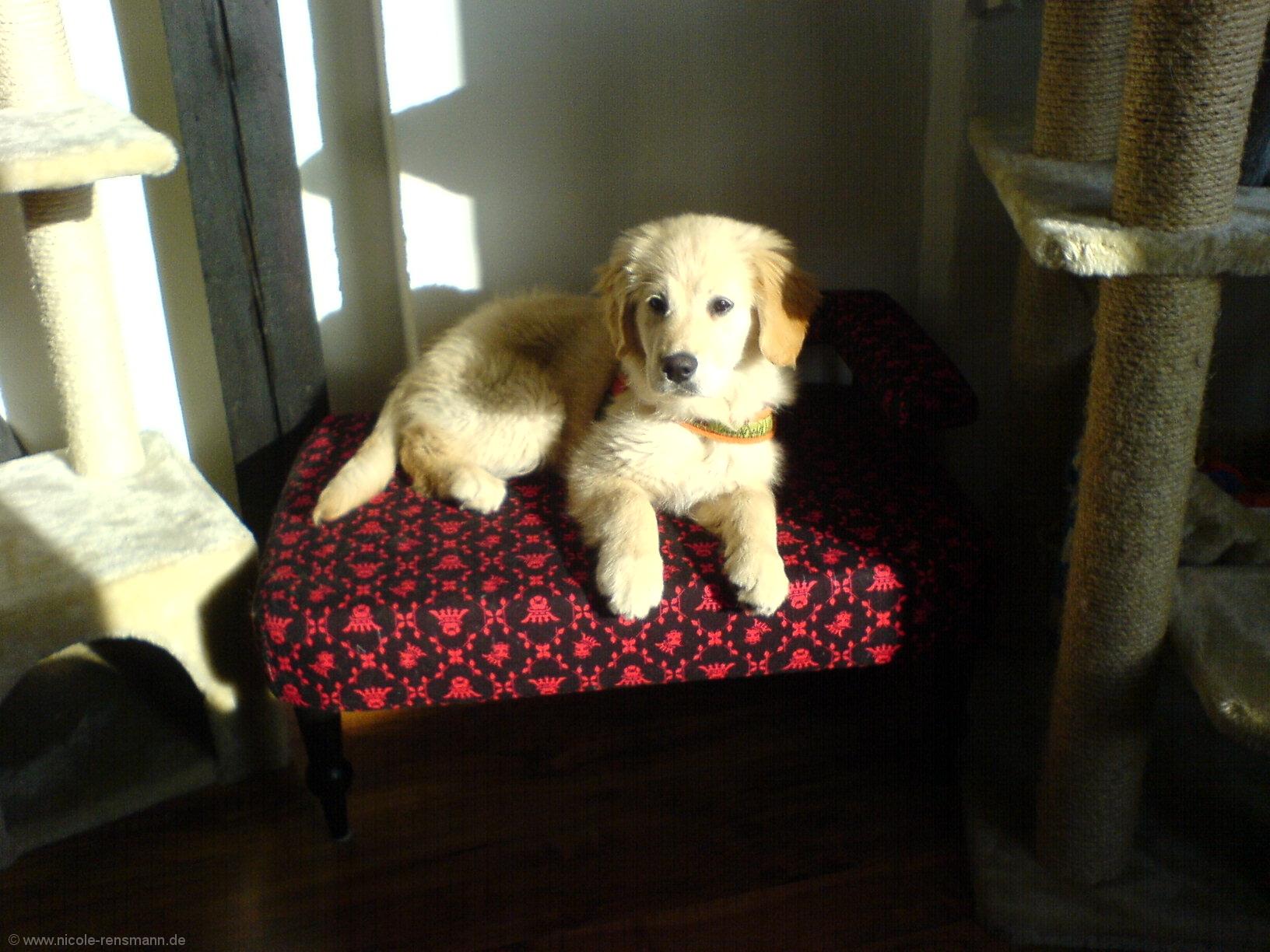 Lola auf dem Thron