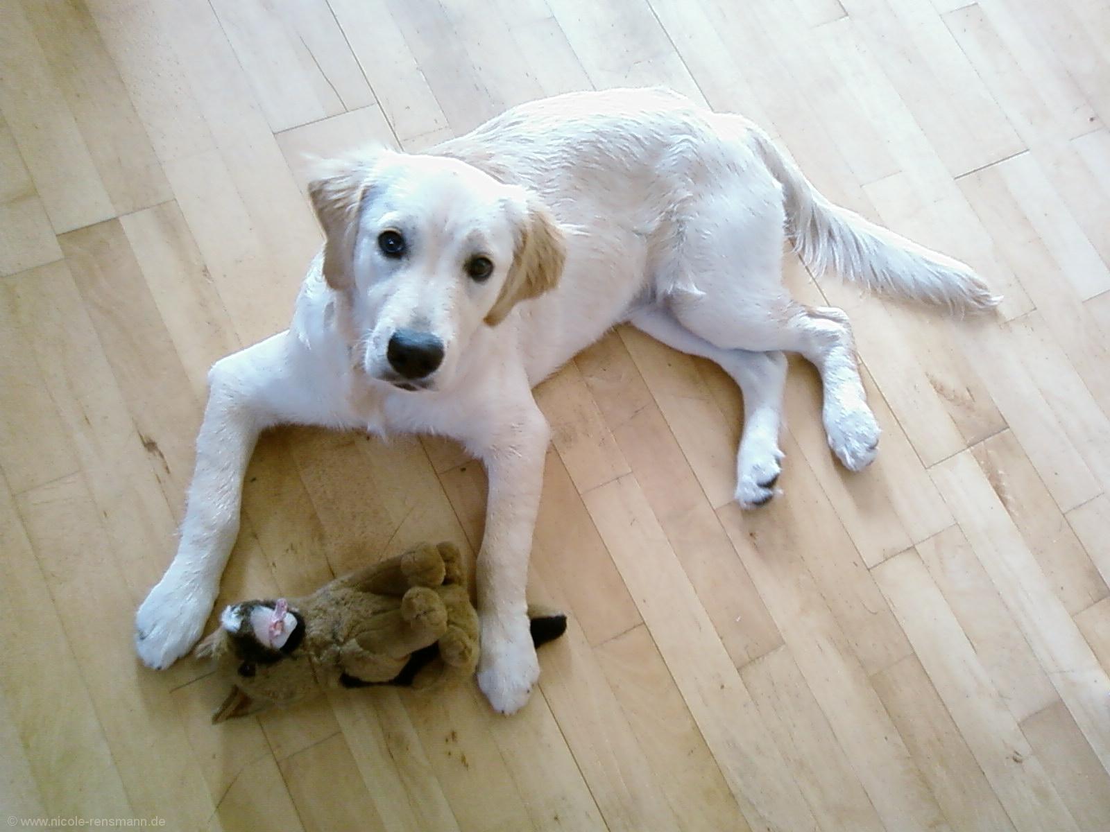 Lola im Haus