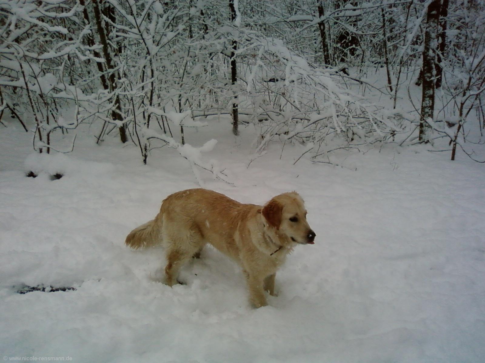 Schnee 2008 - 4