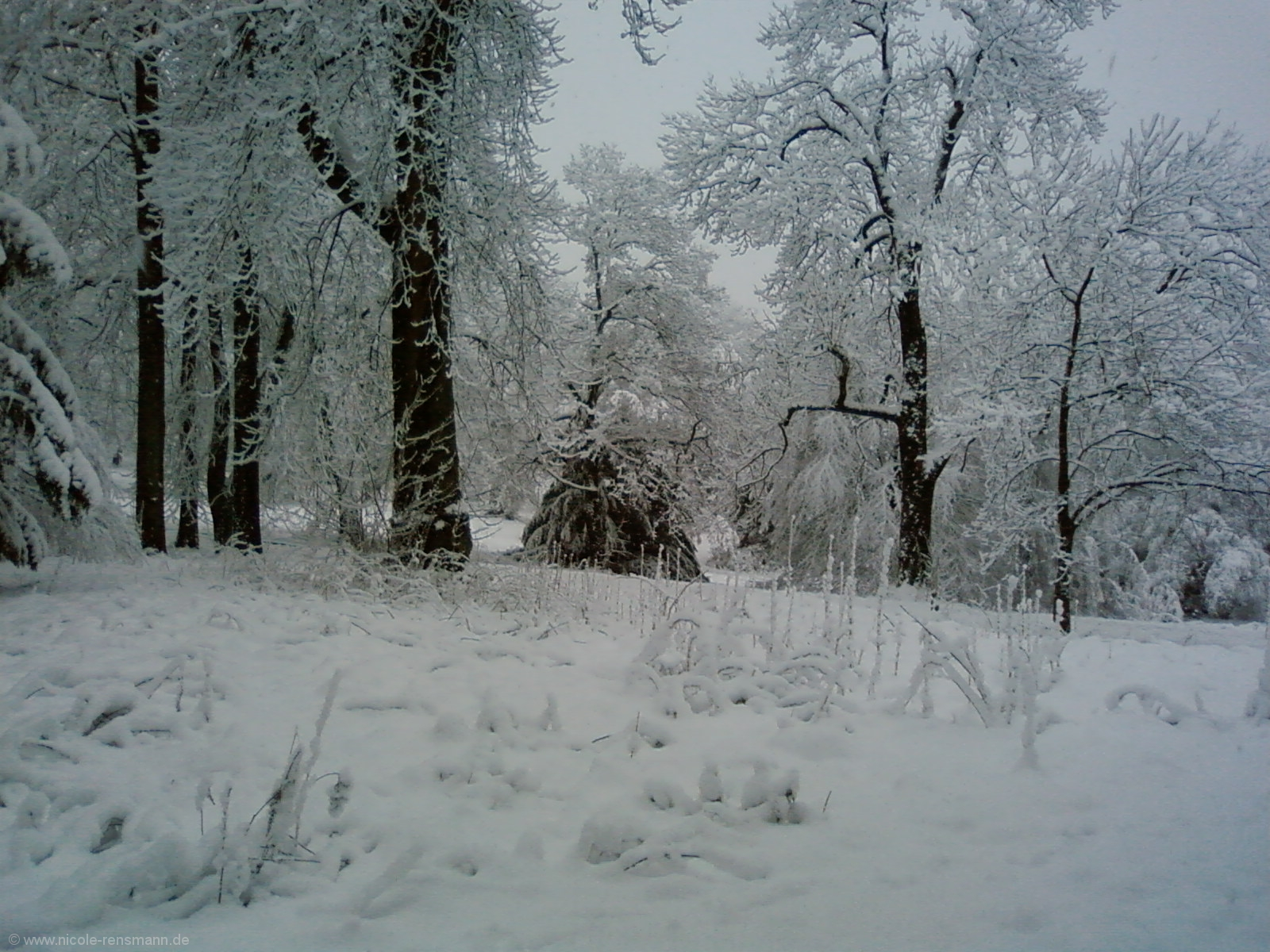 Schnee 2008 - 1