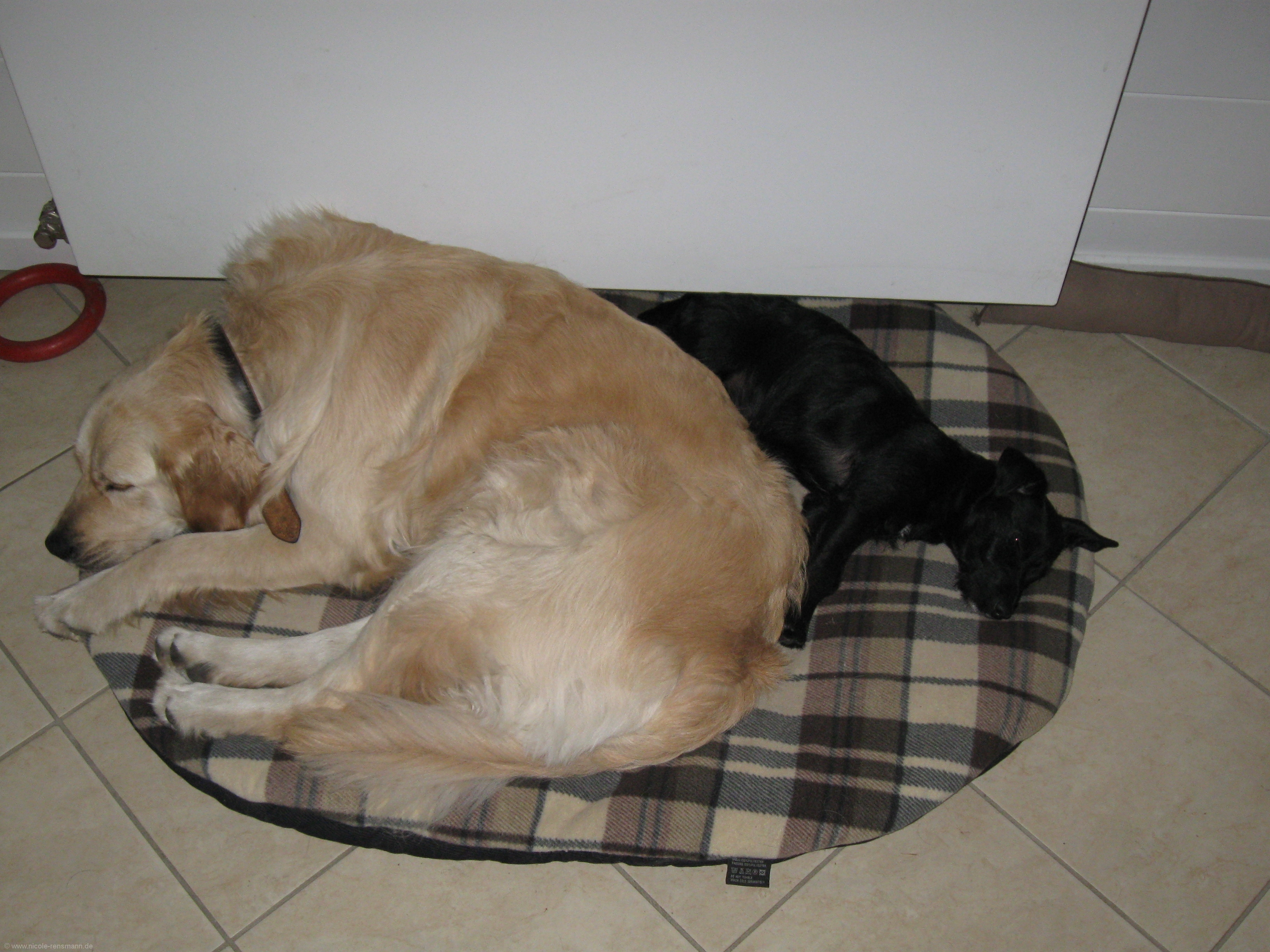 Lola und Yule - sooo müde!
