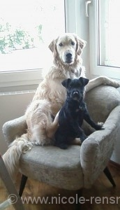 Lola und Yule im Sessel