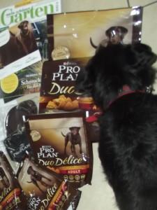 Der kleine Hund beschnuppert die Tüten neugierig, aber mit gewisser Vorsicht.
